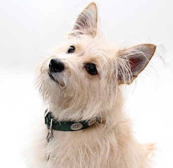 Our dog Celie